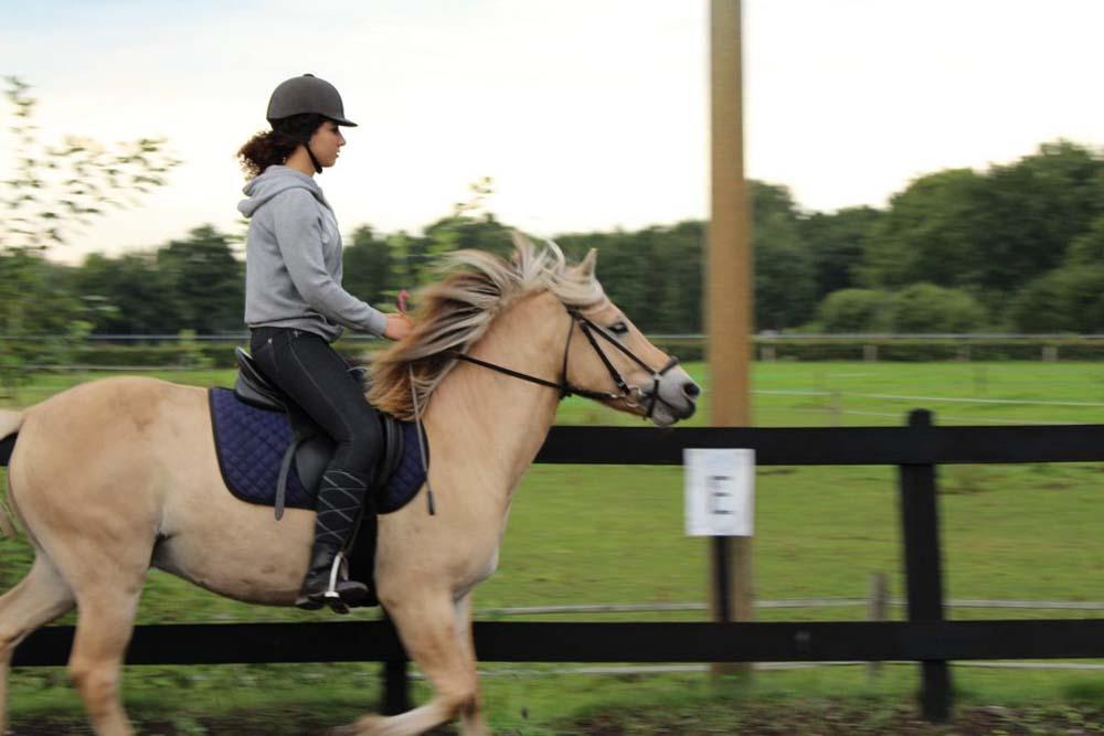 Paardrijden Plus