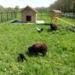 Kleinvee kinderboerderij