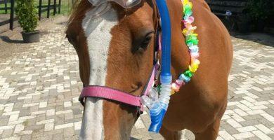 Pony Spott