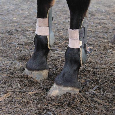 de-gravenruiters-paardenbenen