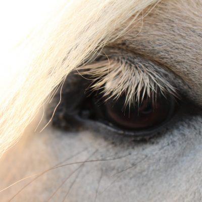 de-gravenruiters-paardenoog