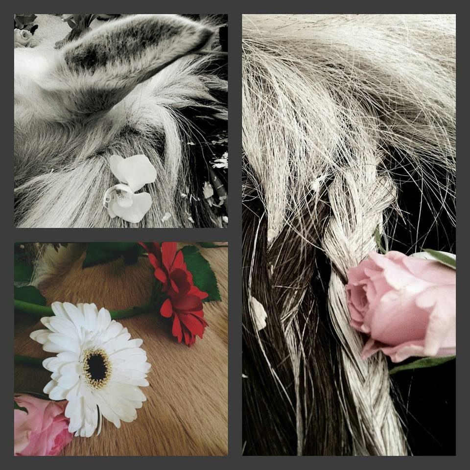 Afscheid Guus collage