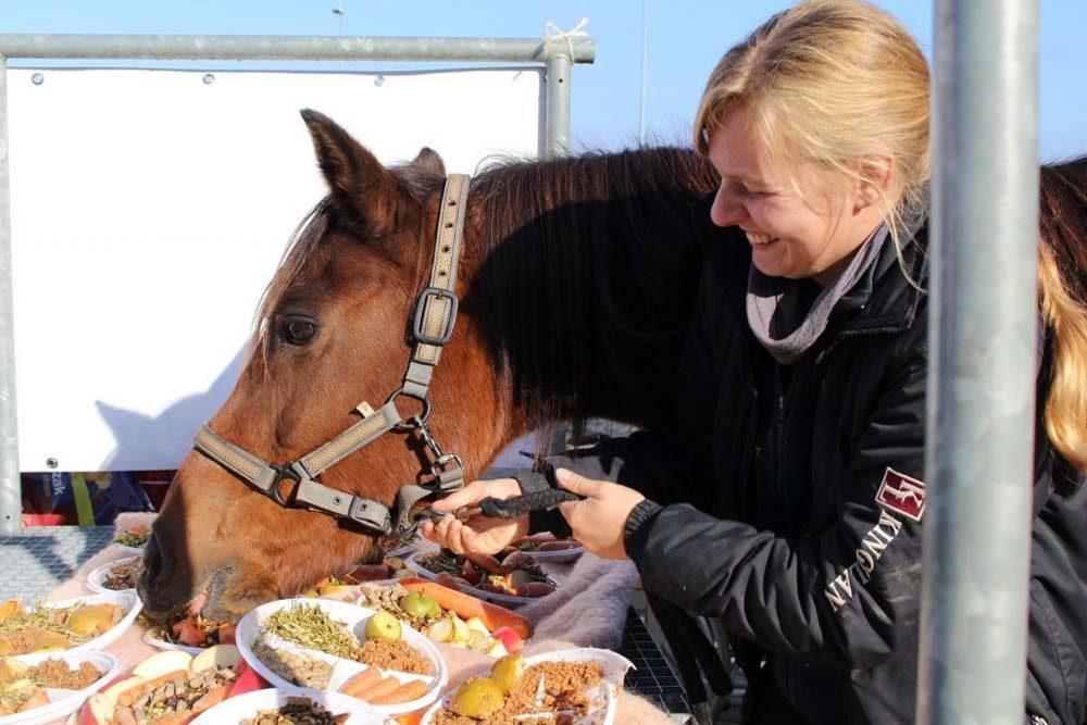 Paard eet taart De Gravenruiters