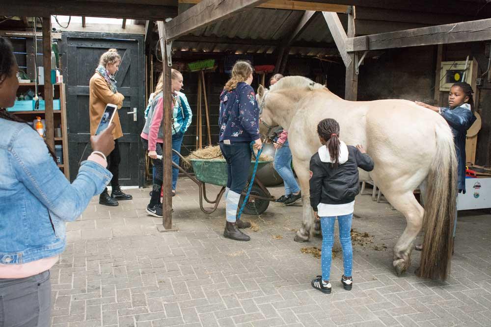 Paard verzorgen tijdens open dag bij De Gravenruiters