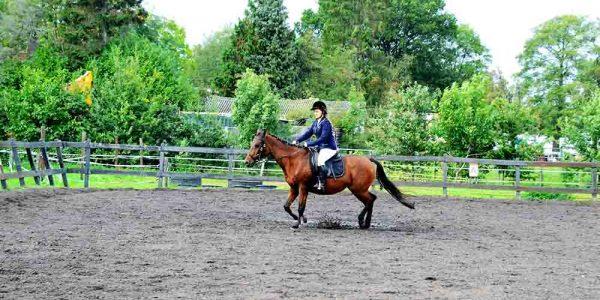 Paardrijden weer opgestart